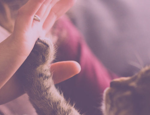 Homeopathy For Pets: Yoga The Cat